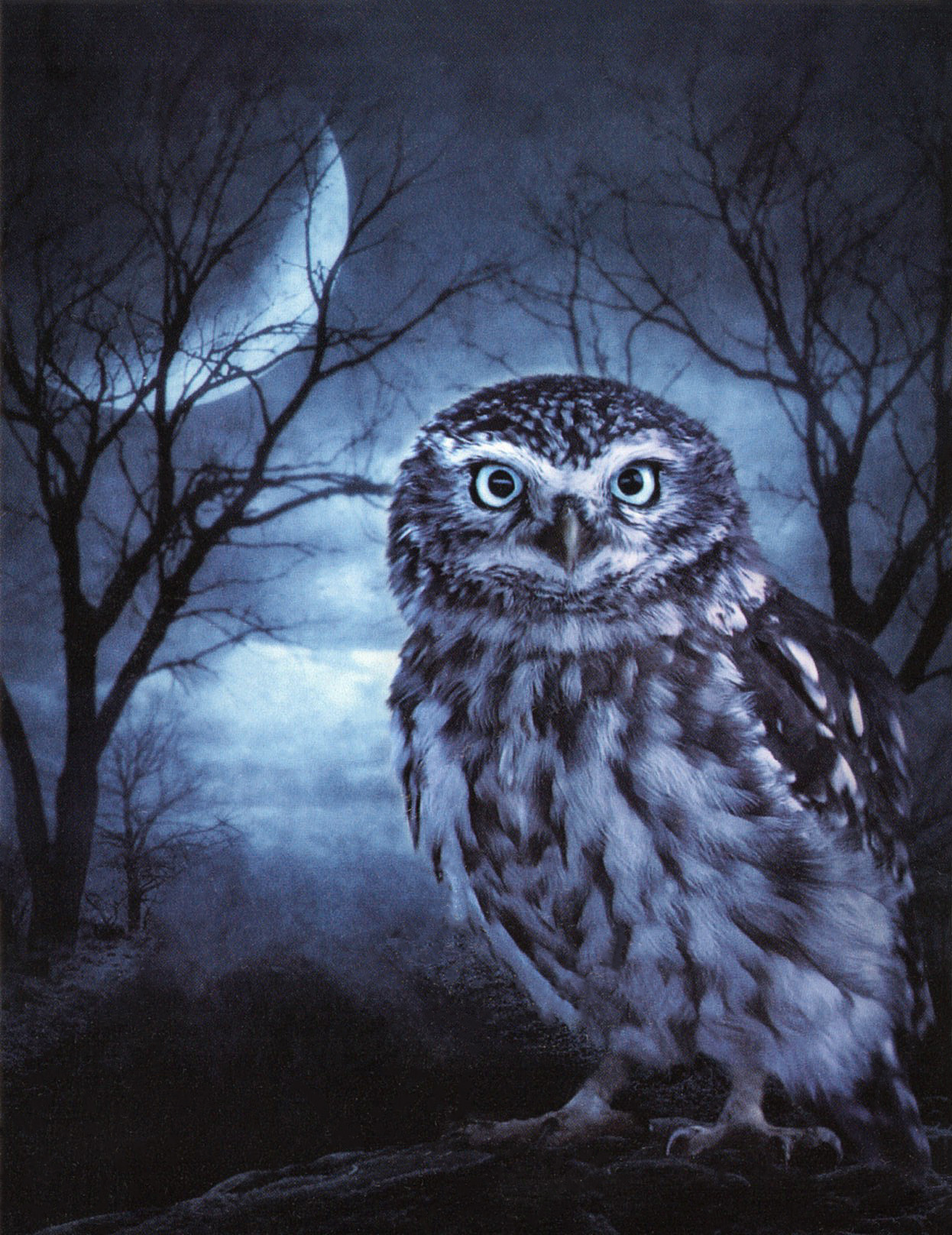 The Owl of Indigo